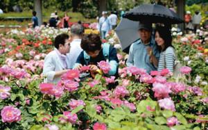 見頃を迎え、バラをめでる人たちでにぎわう園内=可児市の花フェスタ記念公園で
