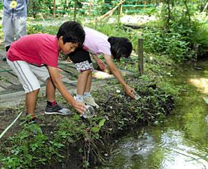 ホタルの幼虫の餌になるカワニナを放流する児童=富山市古沢で
