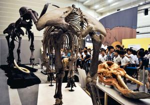マンモスの骨格標本などが並ぶ会場=豊橋市大岩町の市自然史博物館で