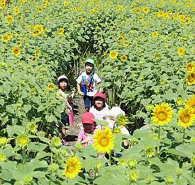 環境教育で植えられたヒマワリの花の迷路を駆け回る子どもたち=射水市黒河で