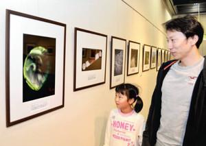 自然の表情を捉えた写真を鑑賞する親子=富山市科学博物館で
