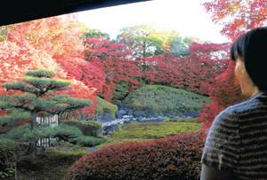 鮮やかな紅葉に囲まれた庭=尾張旭市のどうだん亭で