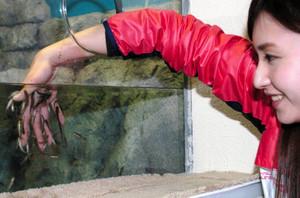 手を入れると皮膚の古い角質を食べてくれるガラ・ルファの体験水槽