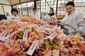 桜の小枝作りに精を出す婦人部のメンバー=敦賀市の金崎宮で