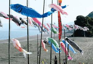 熊野灘の潮風を受け泳ぐこいのぼり(後方右は獅子岩)=熊野市の七里御浜で