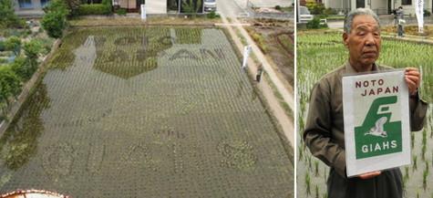 (左)世界農業遺産国際会議を歓迎する田んぼアート(右)田んぼアートの設計図を手にする山田さん=いずれも七尾市藤橋町で