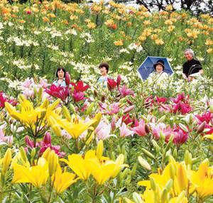 色鮮やかに咲きそろい、見ごろを迎えたユリの花を楽しむ人たち=6日、袋井市久能の「可睡ゆりの園」で(袴田貴資撮影)