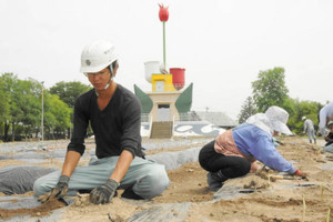 夏のカンナフェスティバルに向けて、球根を植え込む業者ら=砺波市花園町で