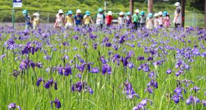 花かつみを見に来た子どもたち。「きれーい」と歓声が上がった=阿久比町草木の「花かつみ園」で