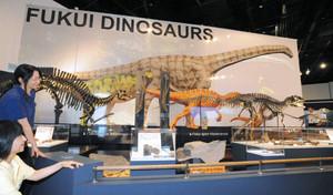 会場に並ぶこれまで勝山で発掘された新種の恐竜化石や骨格標本の数々=勝山市の県立恐竜博物館で