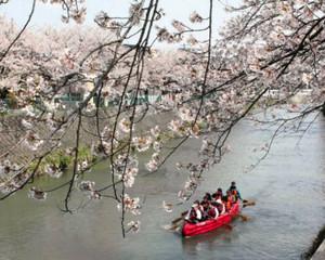 4月にあった千保川沿いの桜を楽しむ川下り=高岡市木津で