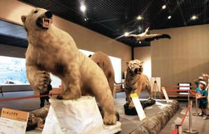 さまざまな生き物の生態などを基に生物多様性の意義を紹介する展示会場=草津市下物町の琵琶湖博物館で