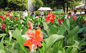 4割ほどのカンナが咲いた会場=砺波チューリップ公園で