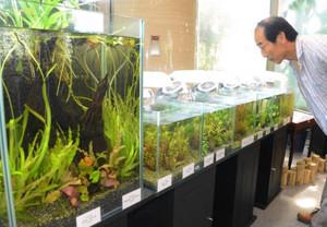 水槽に展示される東南アジアの水草=草津市下物町で