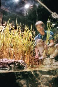 田んぼを再現した展示水槽で、稲刈りをする草間さん=魚津水族館で