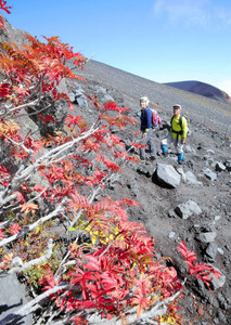 紅葉したナナカマドを楽しむハイカー。後ろは宝永山=7日午前、富士山の富士宮口6合目付近で