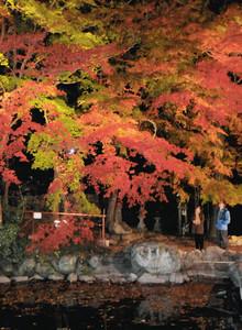 紅葉がライトアップされ、幻想的な風景が広がる鳩ケ嶺八幡宮=飯田市八幡町で