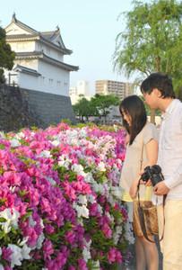 見ごろとなった駿府城公園周辺のツツジ=静岡市葵区で