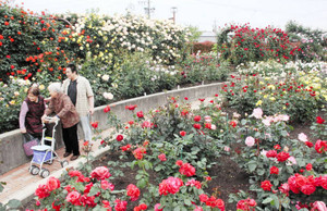 咲き誇る色とりどりの花を楽しむ来場者=大野町加納の町バラ公園で