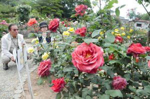 色鮮やかに咲き誇るバラ=四日市市の南部丘陵公園で