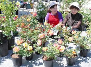 東日本大震災復興支援のチャリティーとして、「アンネのバラ」などを販売するアルプスバラ会の会員ら=伊那市のセントラルパーク広場で