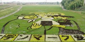 おにぎりを持つ女の子と農家の男性の絵が浮かび上がった田んぼアート=安城市和泉町で