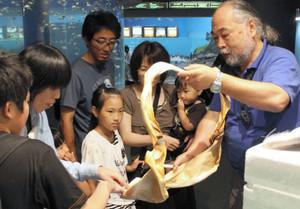 ジンベエザメの頭部の骨格を見せる池口新一郎副館長(右)=七尾市ののとじま水族館で