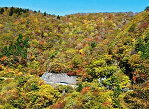 紅葉が見頃となり、鮮やかに色づく伊吹山=米原市で