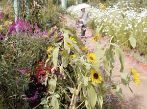 「命の花の輝き」をテーマしたイベントが実施される「花の美術館」=浜松市西区の浜名湖ガーデンパークで