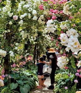 バラのアーチをくぐる来園者=熱海市上多賀で