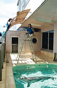 アザラシのプールにすだれを設置する飼育研究係員=魚津水族館で