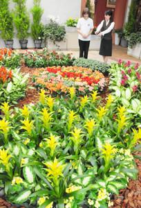 色鮮やかな熱帯の植物を紹介している会場=砺波市チューリップ四季彩館で